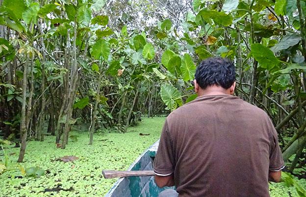 Les marais de l'Amazonie