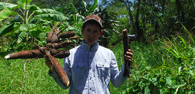 Keuvin a cueillit du Manioc en Amazonie