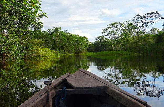 Choses à faire au Pérou : Amazonie