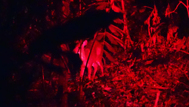 Balade nocturne dans la Selva