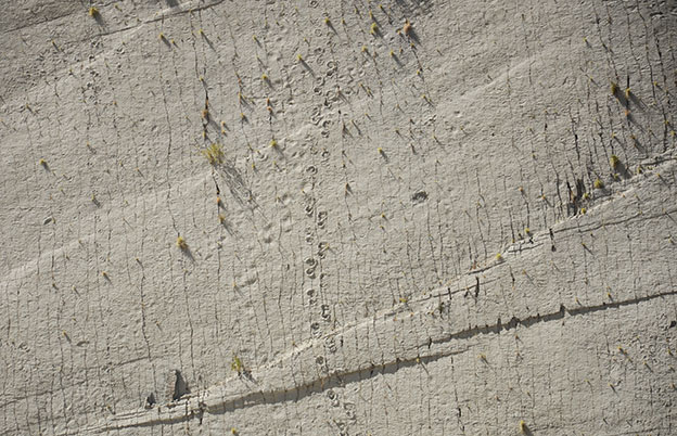 Les traces de dinosaures au Parc du Crétacé