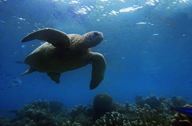 Plonger à Sipadan (Bornéo)