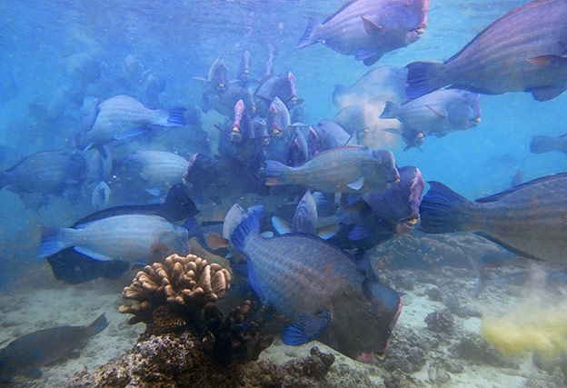 Un des incontournables de Bornéo, la plongée à Sipadan