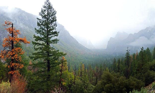 Journée à Yosemite Valley