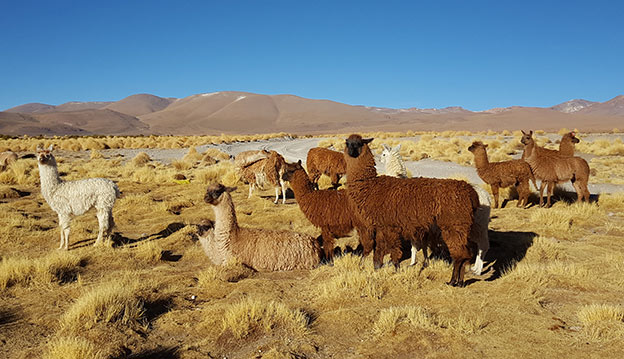 Les incontournables de la Bolivie